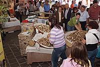Foto Fiera del Fungo di Borgotaro 2009 Porcino_IGP_2009_090
