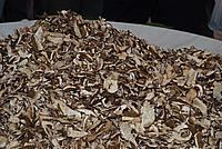 Foto Fiera del Fungo di Borgotaro 2009 Porcino_IGP_2009_092