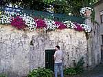 Foto Fiera di San Terenziano 2006 San Terenziano 2006 016