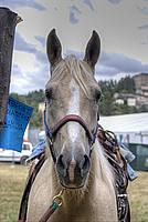Foto Fiera di San Terenziano 2011 San_Terenziano_2011_037