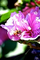Foto Frassineto 2012 Frassineto_2012_100
