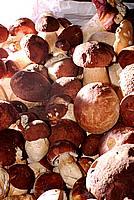 Foto Fungo Porcino in Olio Porcino_in_Olio_006