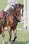 Foto Gara di Equitazione 2008 Equitazione_2008_043
