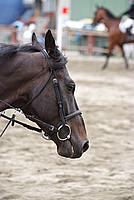Foto Gara di Equitazione 2009 - Pt2 Equitazione_2009_004
