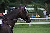 Foto Gara di Equitazione 2009 - Pt2 Equitazione_2009_140