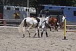 Foto Gara di Equitazione 2009 Equitazione_09_033