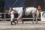Foto Gara di Equitazione 2009 Equitazione_09_039