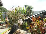 Foto Jamaica Jamaica_090