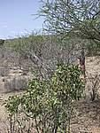 Foto Kenia 2004 Kenia 2004 196