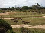 Foto Kenia 2004 Kenia 2004 230
