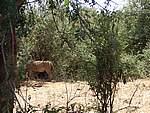 Foto Kenia 2004 Kenia 2004 243