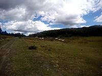 Foto Lago Bino 2015 Lago_Bino_289