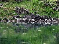 Foto Lago delle Lame Lame_034