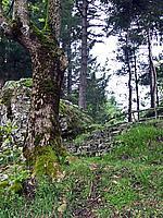 Foto Lago delle Lame Lame_036