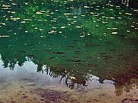 Foto Lago delle Lame Lame_039