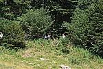 Foto Madonna del Monte Penna 2007 Madonna del Penna 2007 030