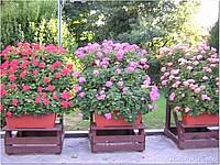 Foto Misano 2005 misano_2005_076