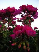 Foto Misano 2005 misano_2005_317