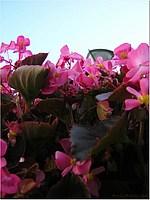 Foto Misano 2005 misano_2005_320