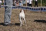 Foto Mostra Canina 2008 - Bedonia Mostra_Canina_2008_008