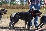 Foto Mostra Canina 2008 - Bedonia Mostra_Canina_2008_011