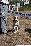 Foto Mostra Canina 2008 - Bedonia Mostra_Canina_2008_012