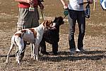 Foto Mostra Canina 2008 - Bedonia Mostra_Canina_2008_018