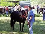 Foto Mostra Cavallo Bardigiano 2007 Mostra Cavallo Bardigiano 2007 004