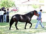 Foto Mostra Cavallo Bardigiano 2007 Mostra Cavallo Bardigiano 2007 006