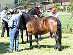 Foto Mostra Cavallo Bardigiano 2007 Mostra Cavallo Bardigiano 2007 007