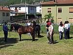 Foto Mostra Cavallo Bardigiano 2007 Mostra Cavallo Bardigiano 2007 010