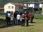 Foto Mostra Cavallo Bardigiano 2007 Mostra Cavallo Bardigiano 2007 011