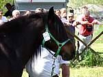 Foto Mostra Cavallo Bardigiano 2007 Mostra Cavallo Bardigiano 2007 014