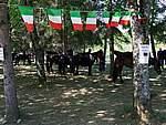 Foto Mostra Cavallo Bardigiano 2007 Mostra Cavallo Bardigiano 2007 018