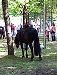 Foto Mostra Cavallo Bardigiano 2007 Mostra Cavallo Bardigiano 2007 022