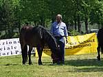 Foto Mostra Cavallo Bardigiano 2007 Mostra Cavallo Bardigiano 2007 030