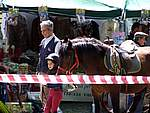 Foto Mostra Cavallo Bardigiano 2007 Mostra Cavallo Bardigiano 2007 034