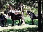 Foto Mostra Cavallo Bardigiano 2007 Mostra Cavallo Bardigiano 2007 036