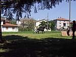 Foto Mostra Cavallo Bardigiano 2007 Mostra Cavallo Bardigiano 2007 039