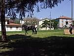 Foto Mostra Cavallo Bardigiano 2007 Mostra Cavallo Bardigiano 2007 040