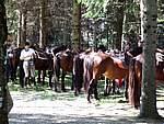 Foto Mostra Cavallo Bardigiano 2007 Mostra Cavallo Bardigiano 2007 041