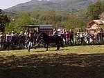Foto Mostra Cavallo Bardigiano 2007 Mostra Cavallo Bardigiano 2007 043
