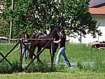 Foto Mostra Cavallo Bardigiano 2007 Mostra Cavallo Bardigiano 2007 044