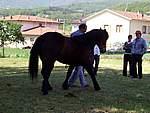 Foto Mostra Cavallo Bardigiano 2007 Mostra Cavallo Bardigiano 2007 046