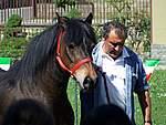 Foto Mostra Cavallo Bardigiano 2007 Mostra Cavallo Bardigiano 2007 048