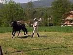Foto Mostra Cavallo Bardigiano 2007 Mostra Cavallo Bardigiano 2007 051