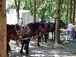 Foto Mostra Cavallo Bardigiano 2007 Mostra Cavallo Bardigiano 2007 053