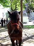 Foto Mostra Cavallo Bardigiano 2007 Mostra Cavallo Bardigiano 2007 054