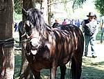 Foto Mostra Cavallo Bardigiano 2007 Mostra Cavallo Bardigiano 2007 055