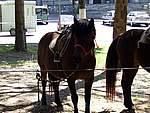 Foto Mostra Cavallo Bardigiano 2007 Mostra Cavallo Bardigiano 2007 056